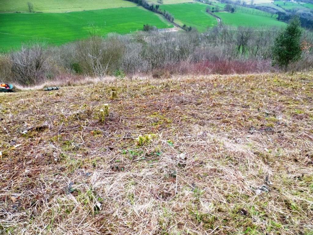 Stinchcombe Hill | Gloucester Vale Conservation Volunteers