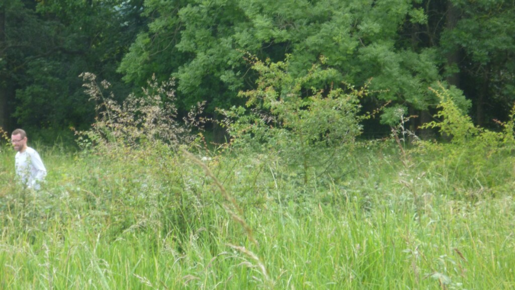 A person standing in a field of tall grass  Description automatically generated with low confidence